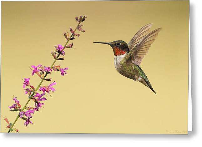 Flight Of A Hummingbird Greeting Card by Daniel Behm