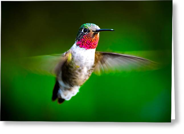 Flight Of Fancy Greeting Card by Mark Andrew Thomas