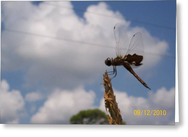 Greeting Card featuring the photograph Flight Of The Dragonfly by Belinda Lee