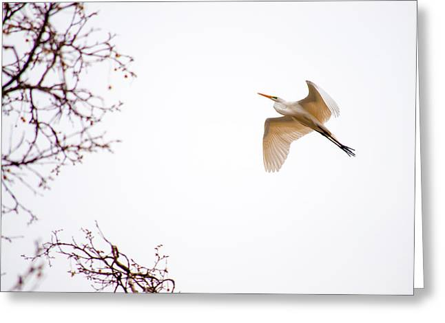 Flight Of The Egret 2  Greeting Card