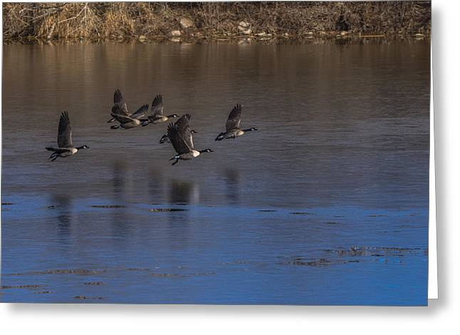 Flight Of The Geese Greeting Card by Ernie Echols