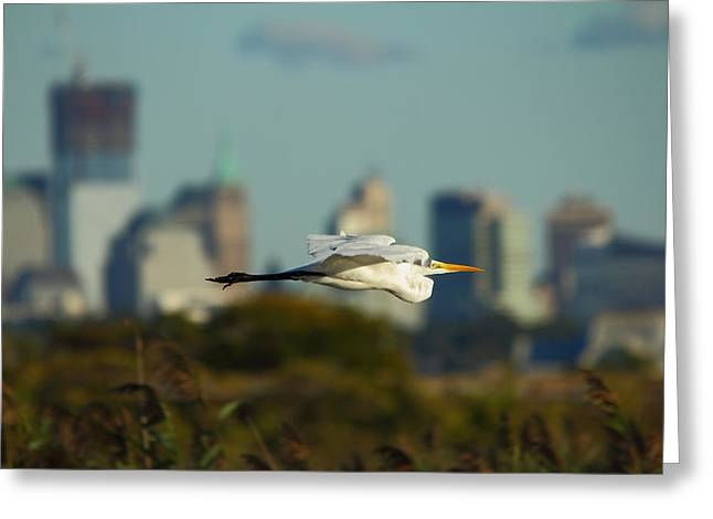 Flight Of The Great Egret Greeting Card