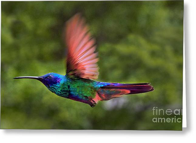 Flight Of The Hummingbird Painting Greeting Card by Al Bourassa
