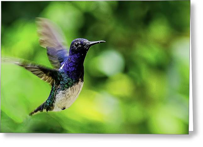 Greeting Card featuring the photograph Flight Of The Hummingbird by Rob Tullis