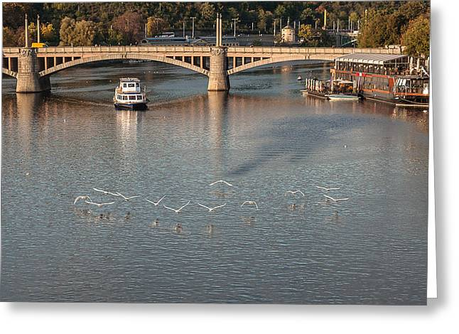 Flight Over Water Greeting Card