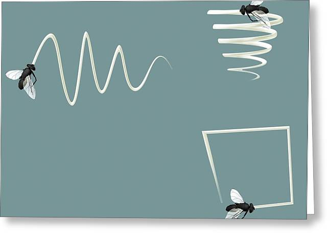 Flight Patterns Of A Fly Greeting Card by Claus Lunau