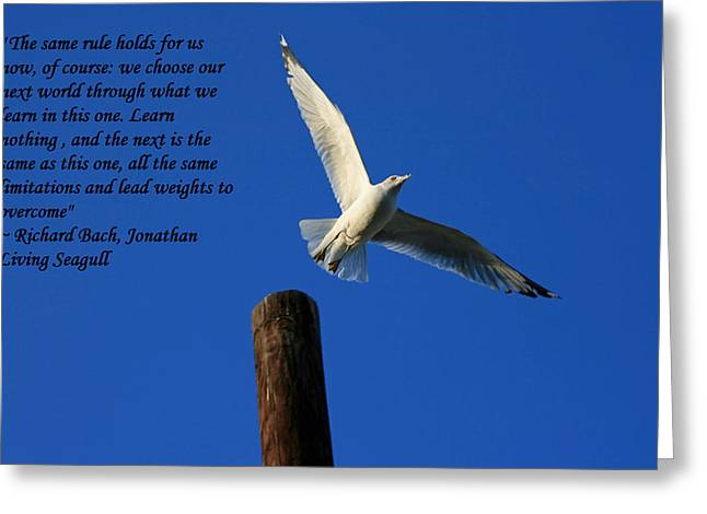 Flight To Freedom Greeting Card by Andy Lawless