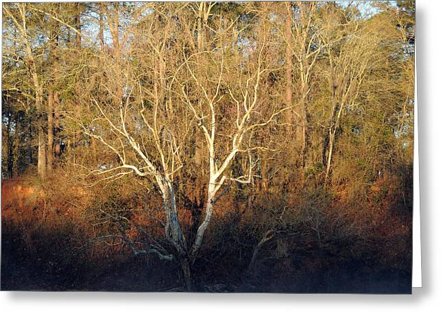 Greeting Card featuring the photograph Flint River 16 by Kim Pate