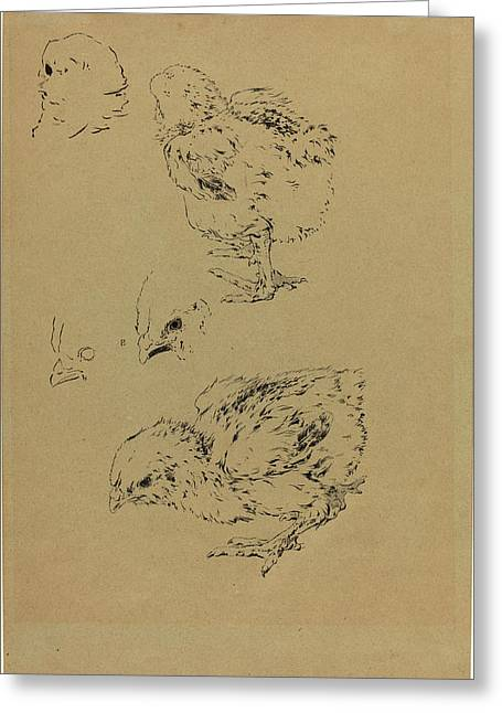 Félix Bracquemond, Chicks, French, 1833-1914 Greeting Card