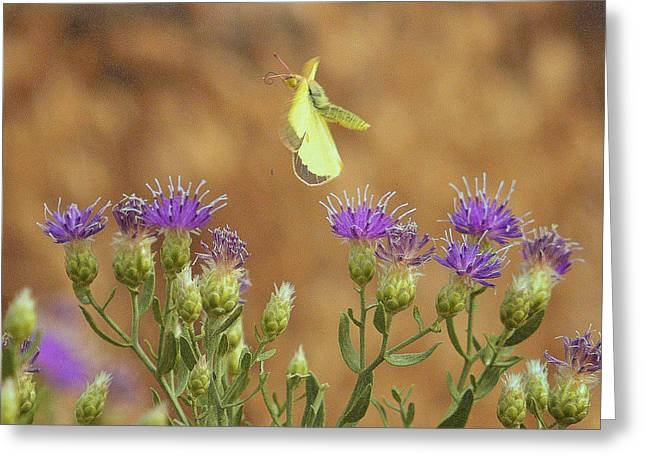 Greeting Card featuring the photograph Floating.. by Al  Swasey