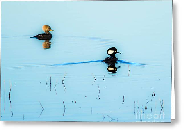 Floating And Glowing Greeting Card by Ursula Lawrence