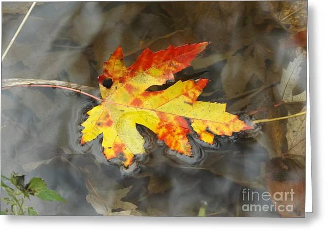Floating Autumn Leaf Greeting Card by Erick Schmidt