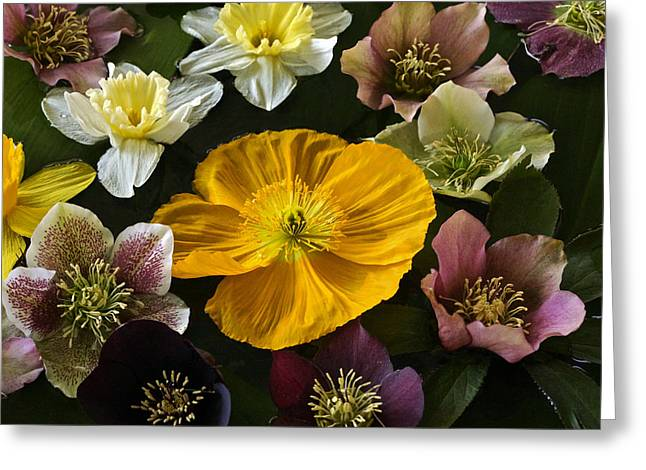 Floating Bouquet Of Early April Flowers Greeting Card