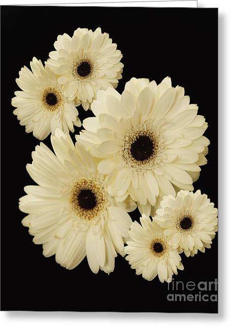 Floating Flowers Greeting Card by Nancy Dempsey