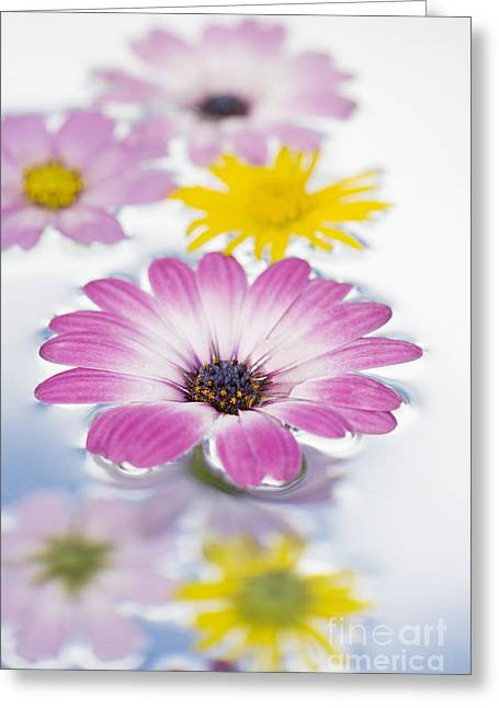 Floating Flowers Greeting Card by Tim Gainey