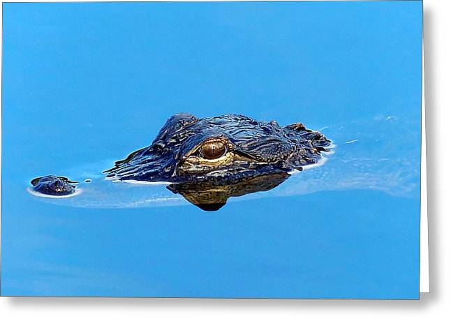 Floating Gator Eye Greeting Card