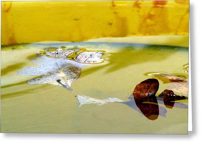 Floating In The Rain Barrel Greeting Card by Selma Glunn