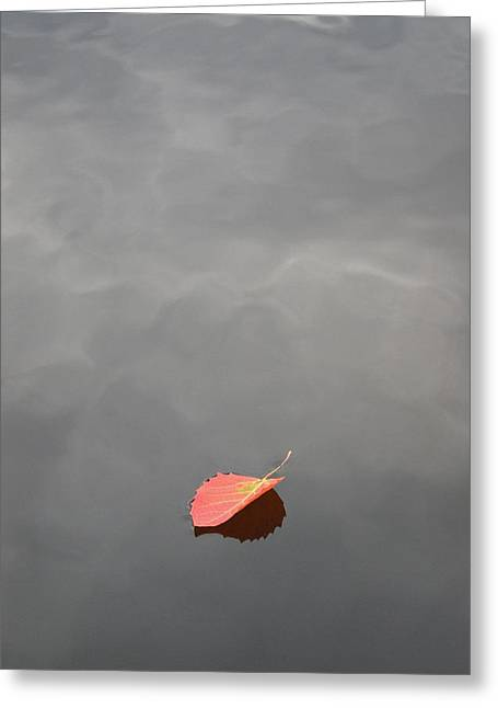Floating Jewel Greeting Card by Jake Barbour