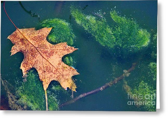 Floating Leaf  Greeting Card by Karen Adams