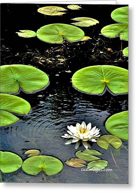 Floating Lily Greeting Card