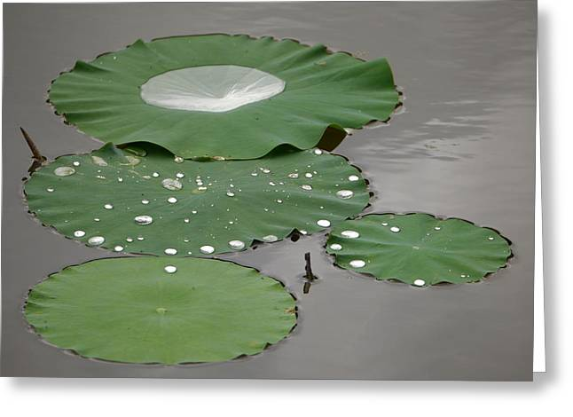 Floating Lotus Leaves Greeting Card by Jane Ford