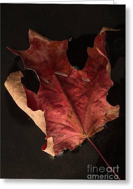 Floating Maple Leaf Greeting Card by Edward Fielding