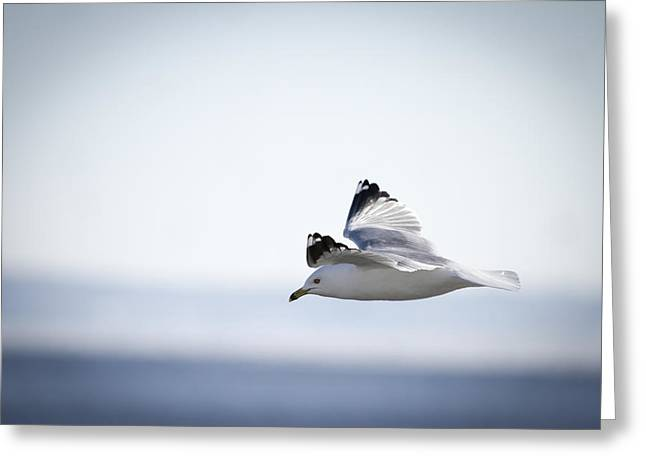 Floating On High 1 Greeting Card by Thomas Young