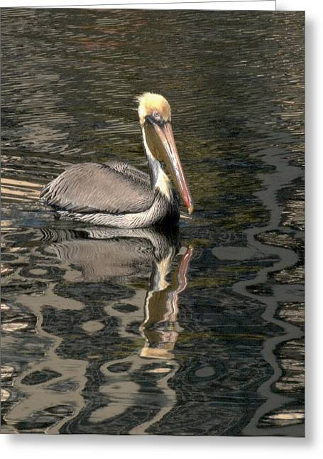 Floating Pelican Greeting Card