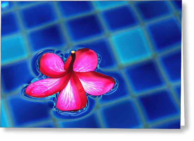 Floating Petal Greeting Card