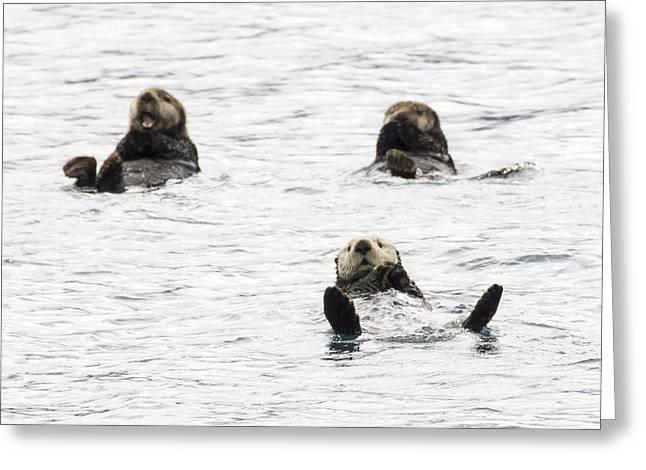 Floating Sea Otters Greeting Card by Saya Studios