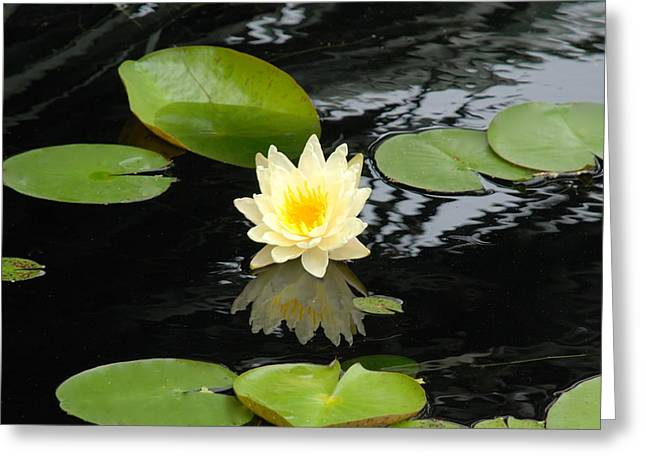 Floating Yellow Water Lily Greeting Card