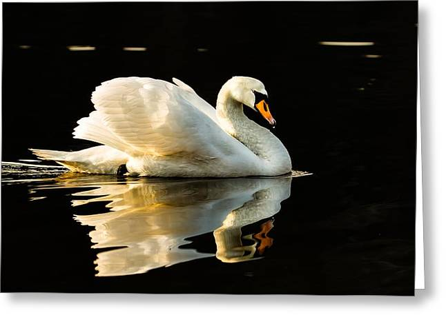 Floats On Peaceful Water Greeting Card by Rose-Maries Pictures