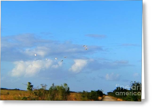 Flock Of Egrets Greeting Card by Andres LaBrada