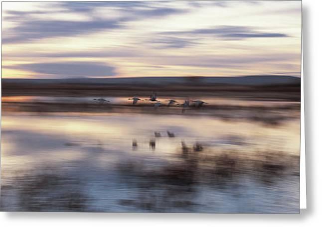 Flock Of Sandhill Cranes Flying Greeting Card