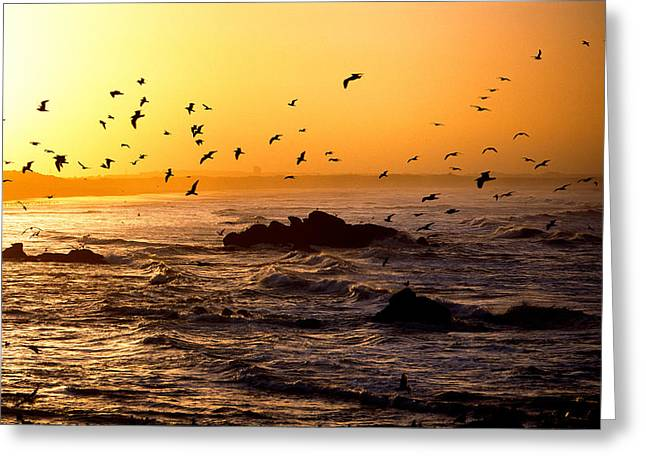 Flock Of Seagulls Fishing In Waves Greeting Card