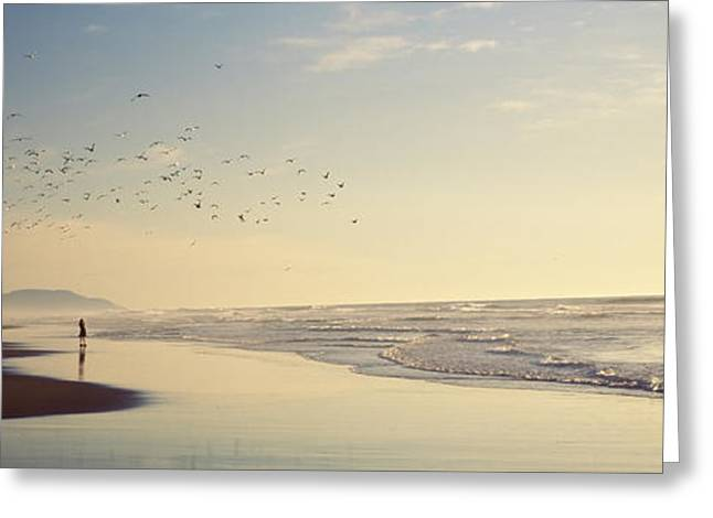 Flock Of Seagulls Flying Above A Woman Greeting Card by Panoramic Images