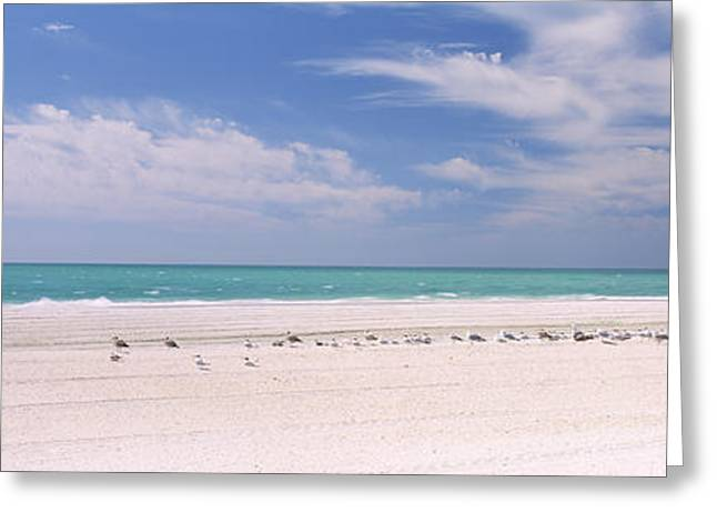 Flock Of Seagulls On The Beach, Lido Greeting Card by Panoramic Images