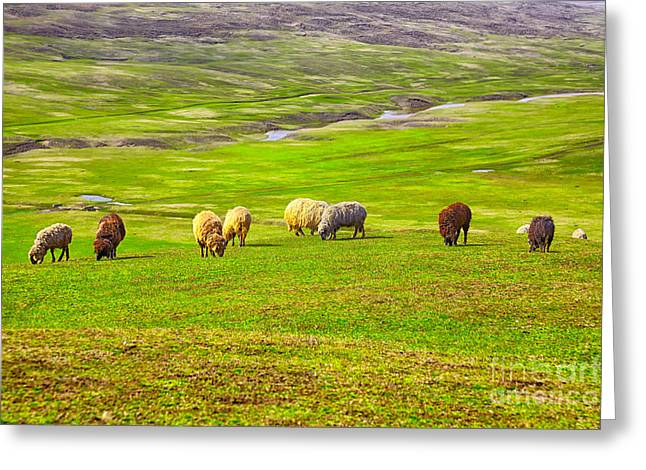 Flock Of Sheep Greeting Card by Gabriela Insuratelu