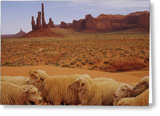 Flock Of Sheep In An Arid Landscape Greeting Card