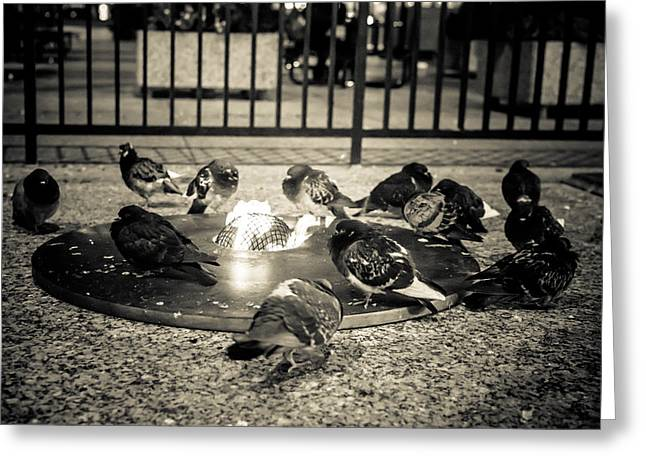 Flockin' Around The Fire Greeting Card by Melinda Ledsome