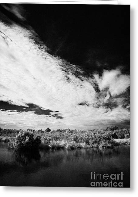 Flooded Grasslands And Mangrove Forest In The Florida Everglade Greeting Card