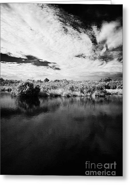 Flooded Grasslands And Mangrove Forest In The Florida Everglades Greeting Card
