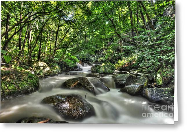Greeting Card featuring the photograph Flooded Small Stream  by Dan Friend