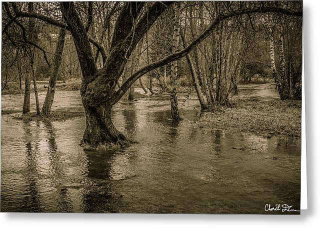 Flooded Tree Greeting Card