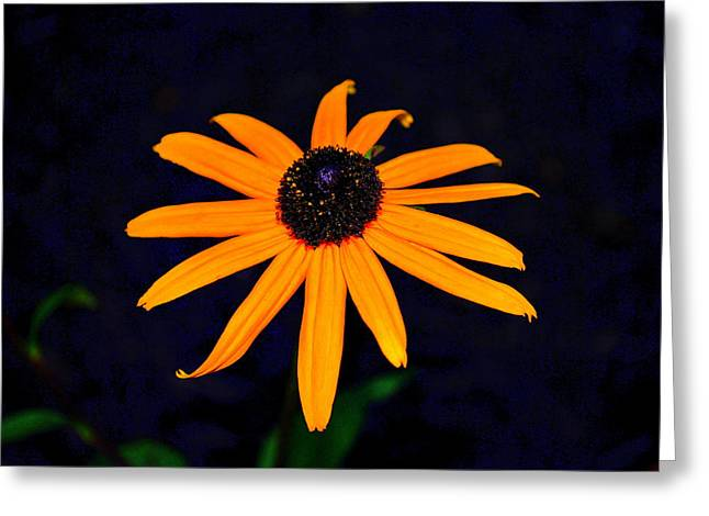 Greeting Card featuring the photograph Flora 4 by Mary Beth Landis
