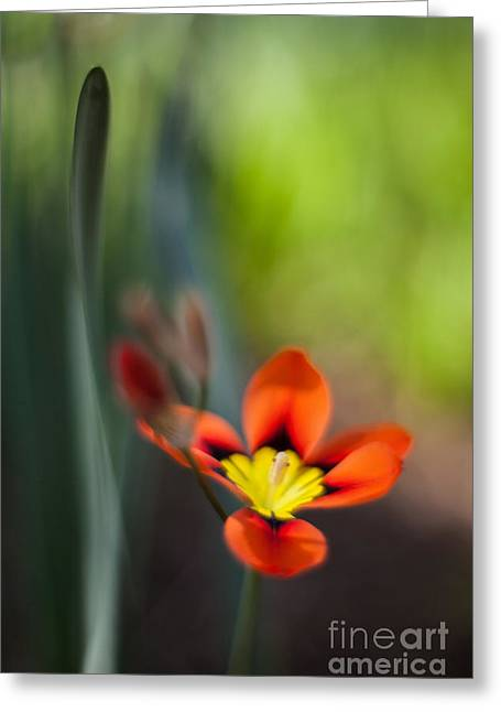 Flora Counterpoint Greeting Card by Mike Reid