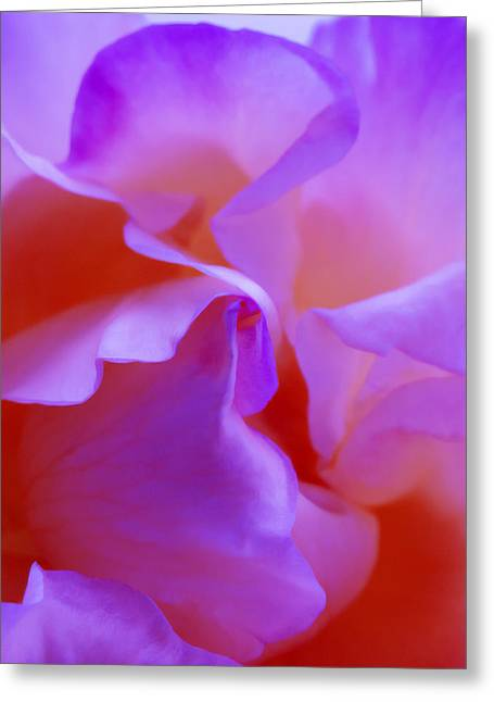 Abstract Red White Orange Pink Flowers Art Work Photography Greeting Card by Artecco Fine Art Photography
