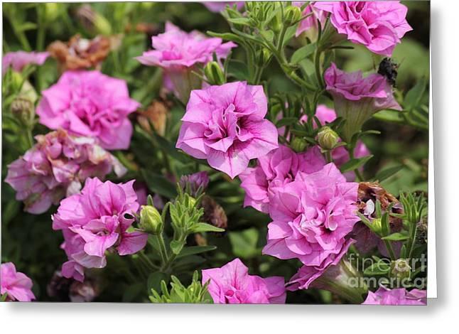 Floral Beauties Greeting Card