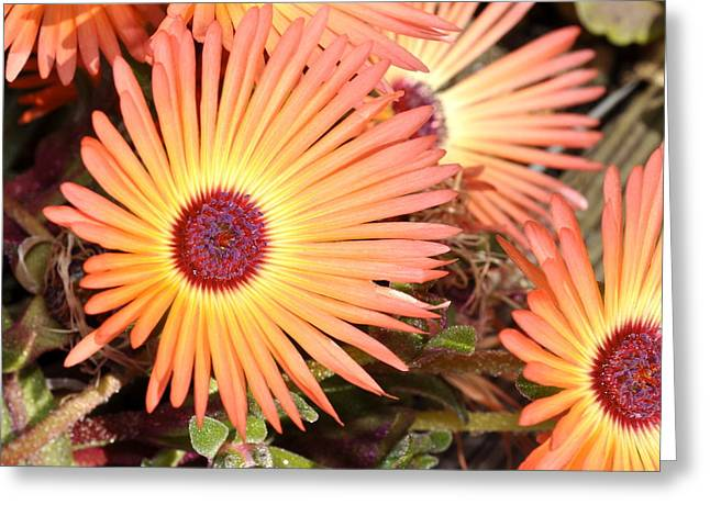 Greeting Card featuring the photograph Floral by Cathy Mahnke