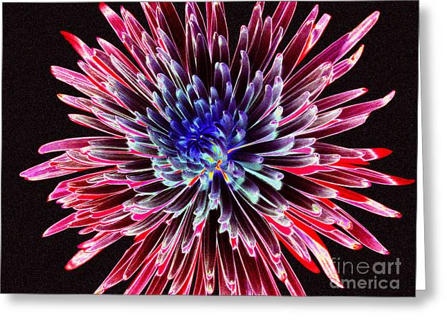 Floral Color Burst Greeting Card by Sue Melvin
